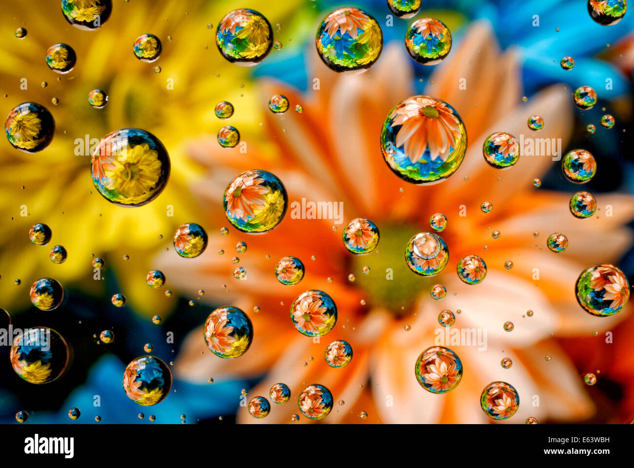 Abstract photograph of flowers reflected in water droplets - Stock Image