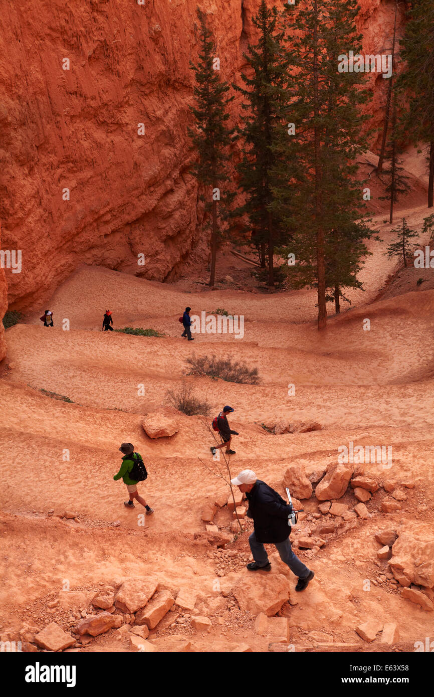 Hikers on zigzag section of Navajo Loop trail, Bryce Canyon National Park, Utah, USA - Stock Image