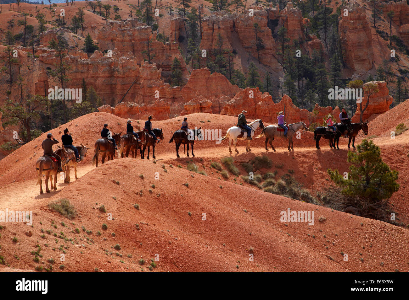 Horse trekkers near Queen's Garden Trail through hoodoos, Bryce Canyon National Park, Utah, USA - Stock Image