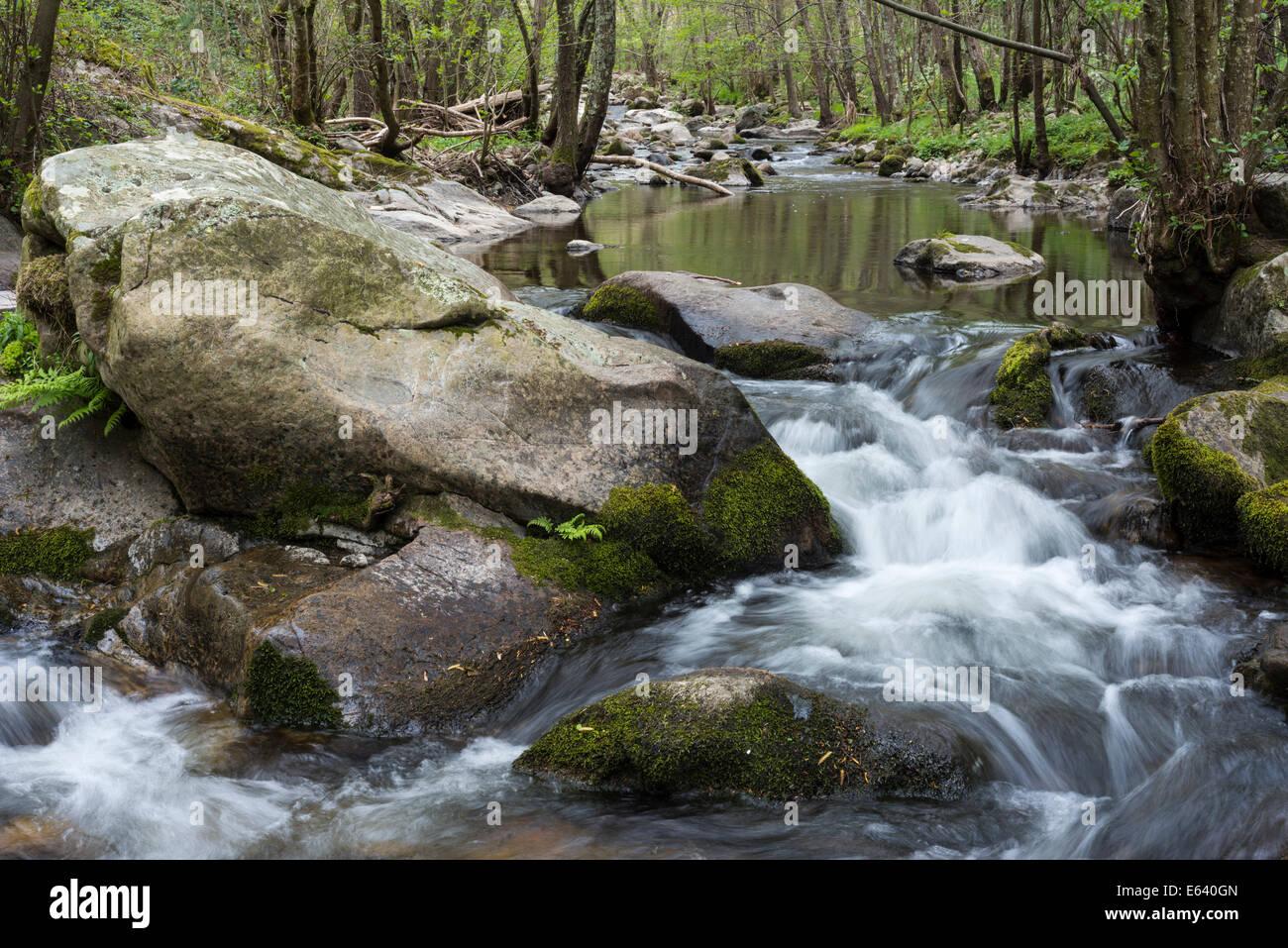 La Daronne mountain stream in the Ardèche, Saint-Félicien, Rhône-Alpes, France - Stock Image