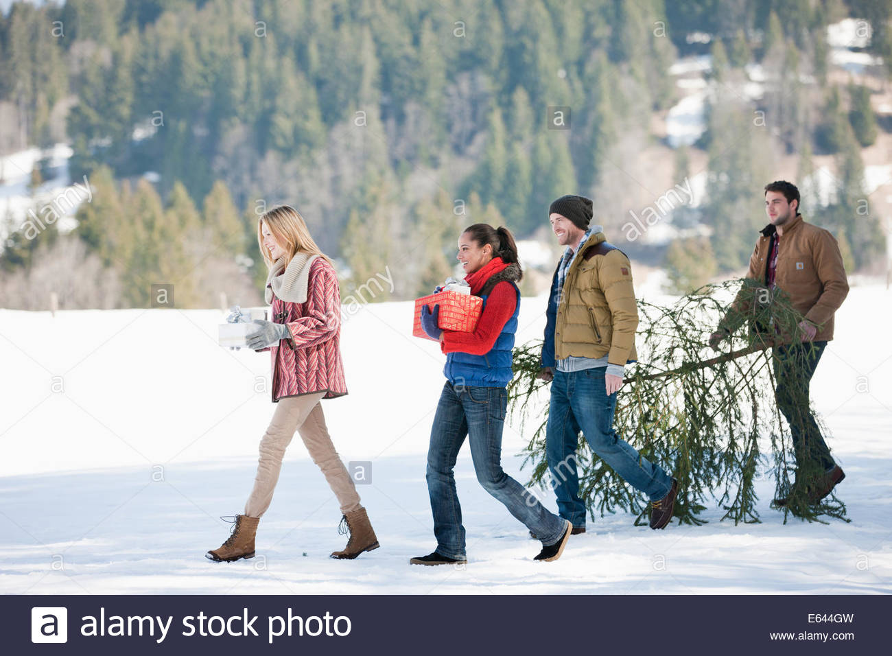 Couples carrying fresh cut Christmas tree and gifts in snow - Stock Image