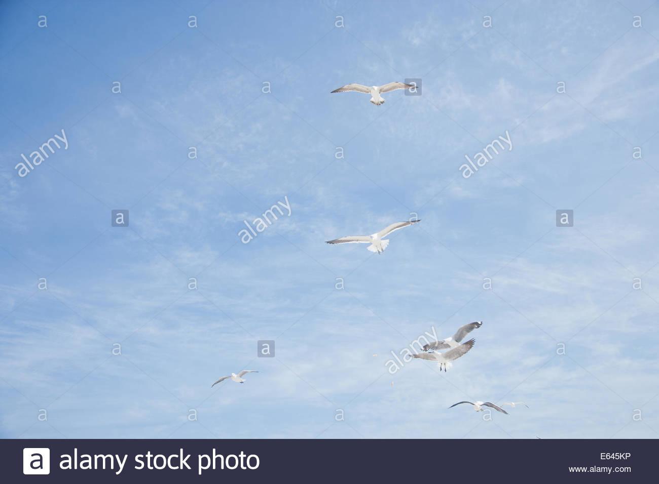 Gulls against blue sky - Stock Image