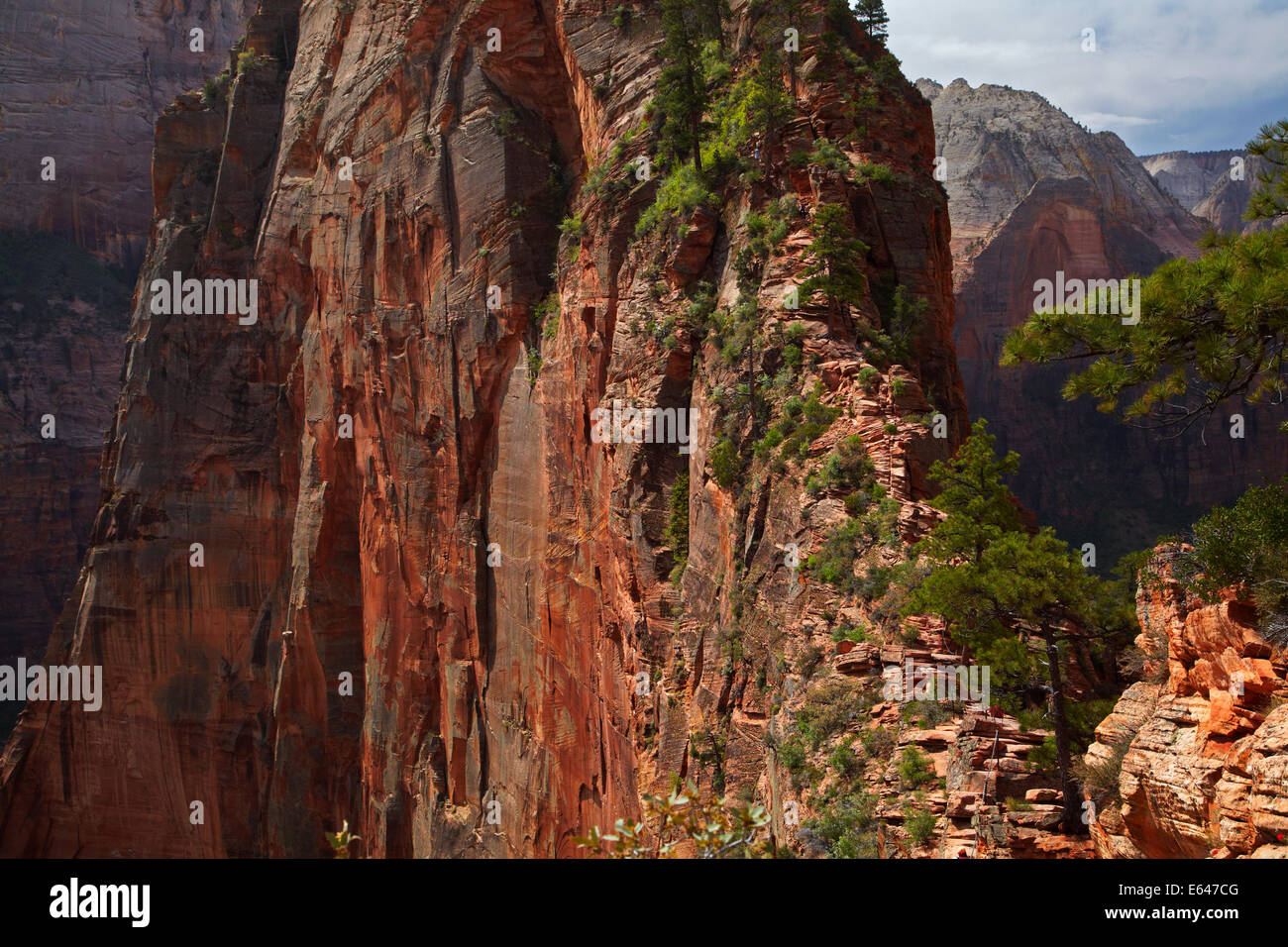 Narrow steep hiking track leading to Angel's Landing, with drops to Zion Canyon over 1000ft/305m below, Zion - Stock Image