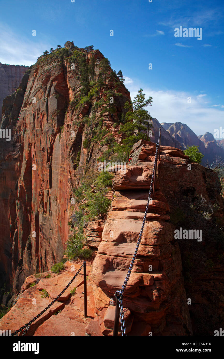 Narrow 'Leap of Faith' part of Angels Landing track, with 1000ft/305m sheer drops on both sides, and Angel's - Stock Image