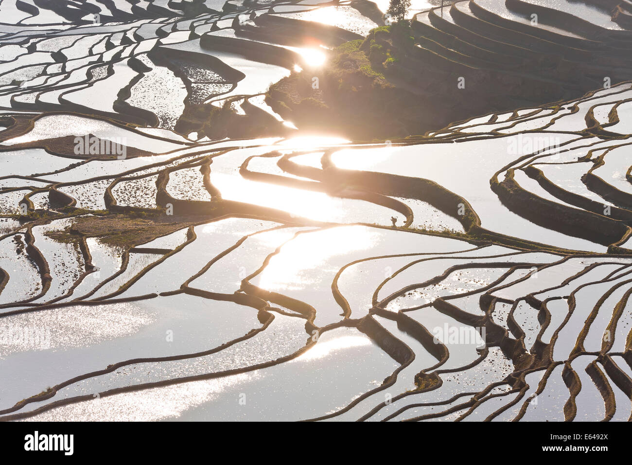 Reflections off water filled rice terraces, Yuanyang County, Honghe, Yunnan Province, China Stock Photo