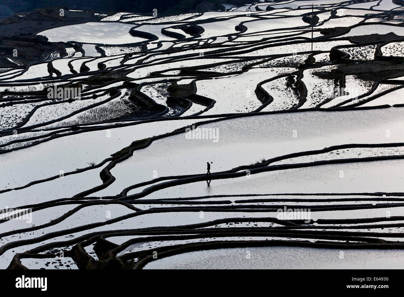 Reflections off water filled rice terraces, Yuanyang County, Honghe, Yunnan Province, China Stock Photo