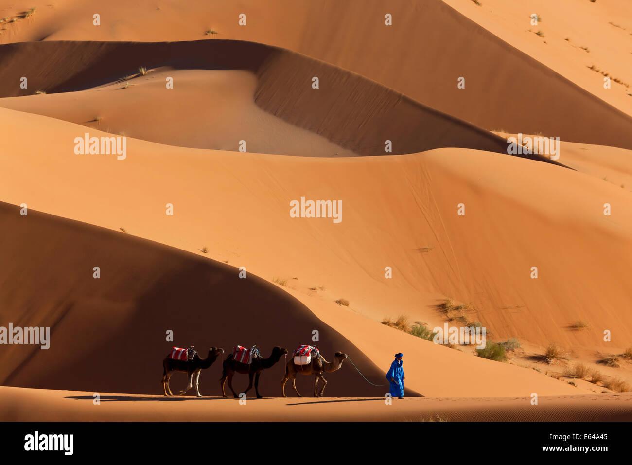 Camels & Dunes, Erg Chebbi, Sahara Desert, Morocco - Stock Image