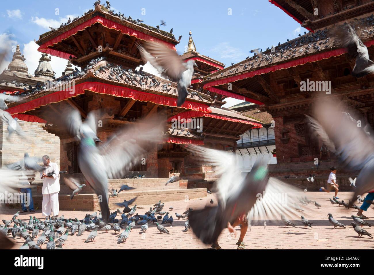 Pigeons, Durbar Square, Kathmandu, Nepal - Stock Image