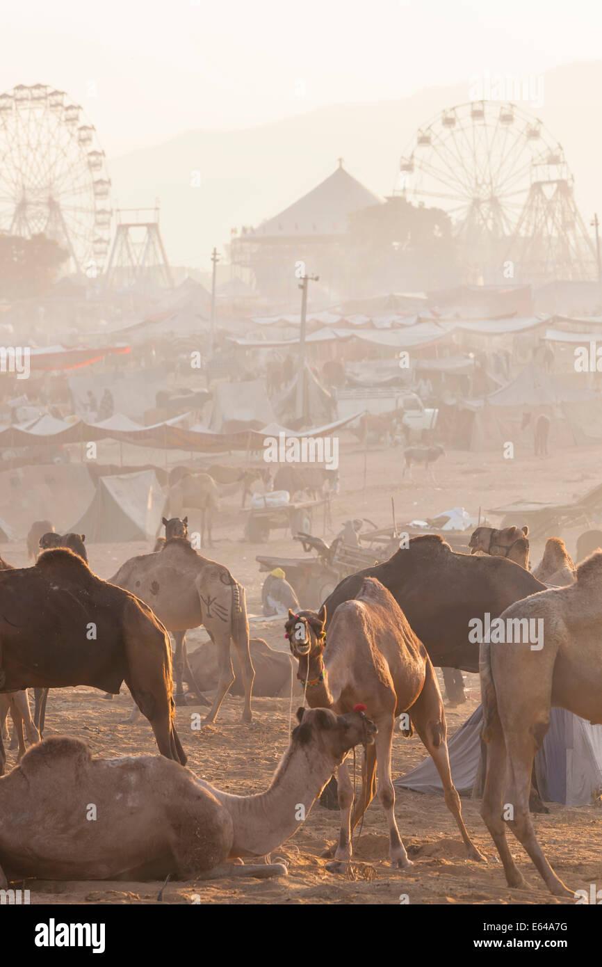 Indian woman, Pushkar camel fair, Pushkar, Rajasthan State, India - Stock Image