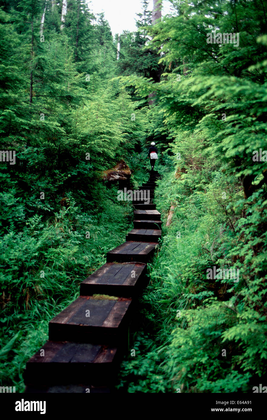 Hiking the Perseverance Trail,Tongass National Forest,Ketchikan,Alaska - Stock Image