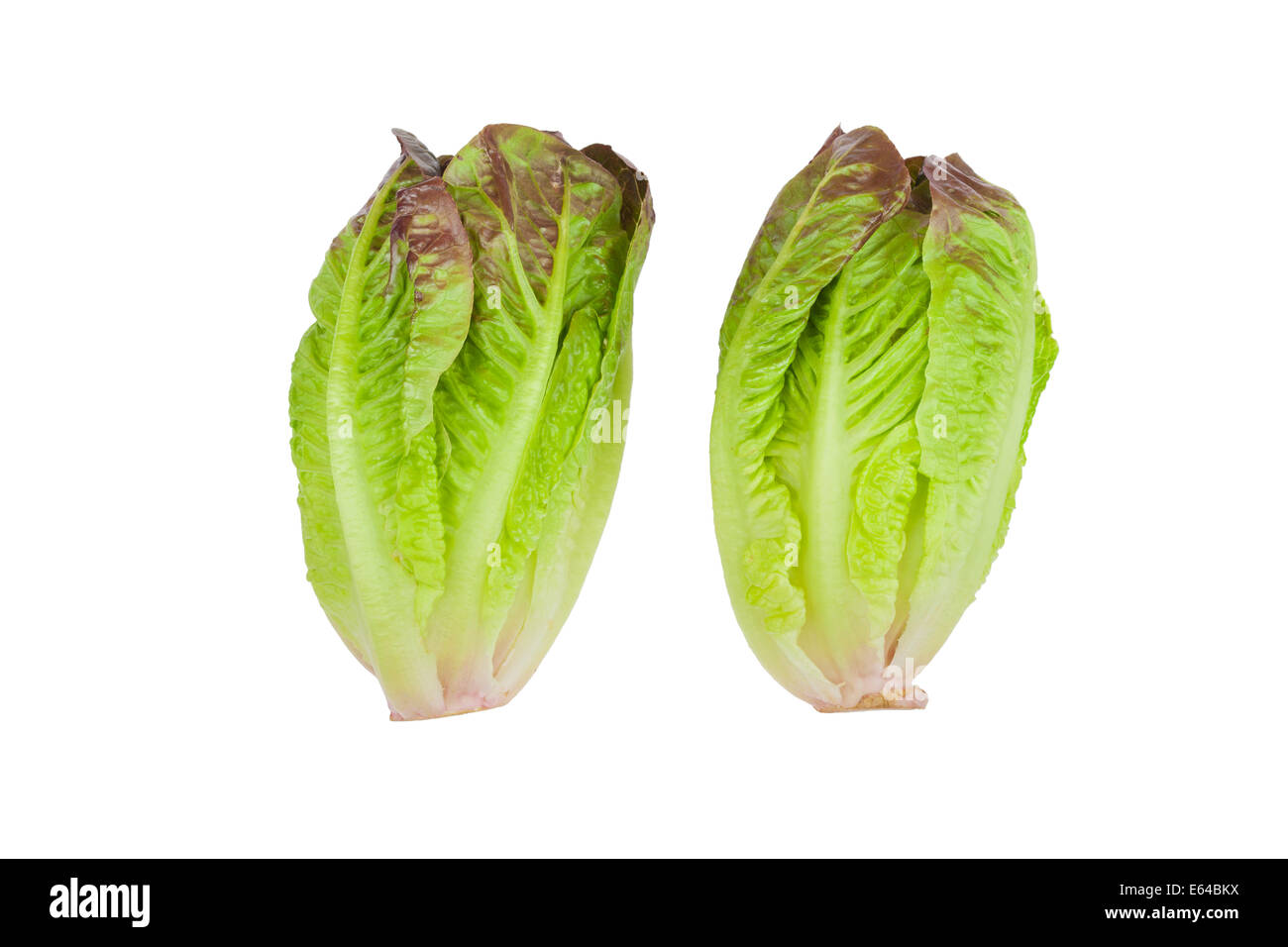 Fresh whole red leaved mini cos lettuce - Stock Image