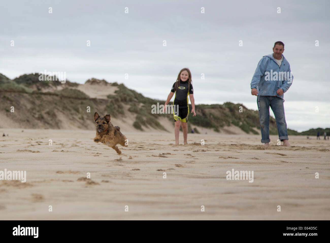 My families Border Terrier cross, he has a large personality and is filled with energy. - Stock Image