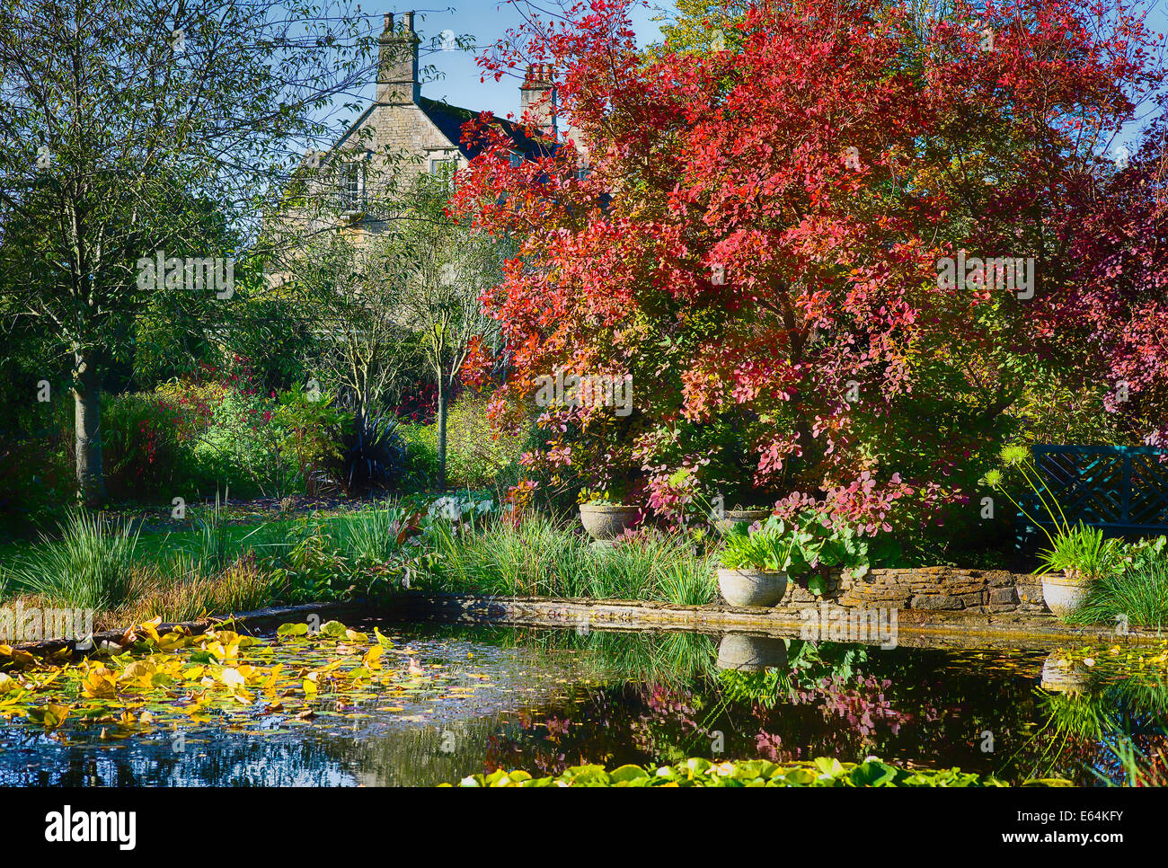 The Courts garden with pool and cotinus trees in autumn - Stock Image