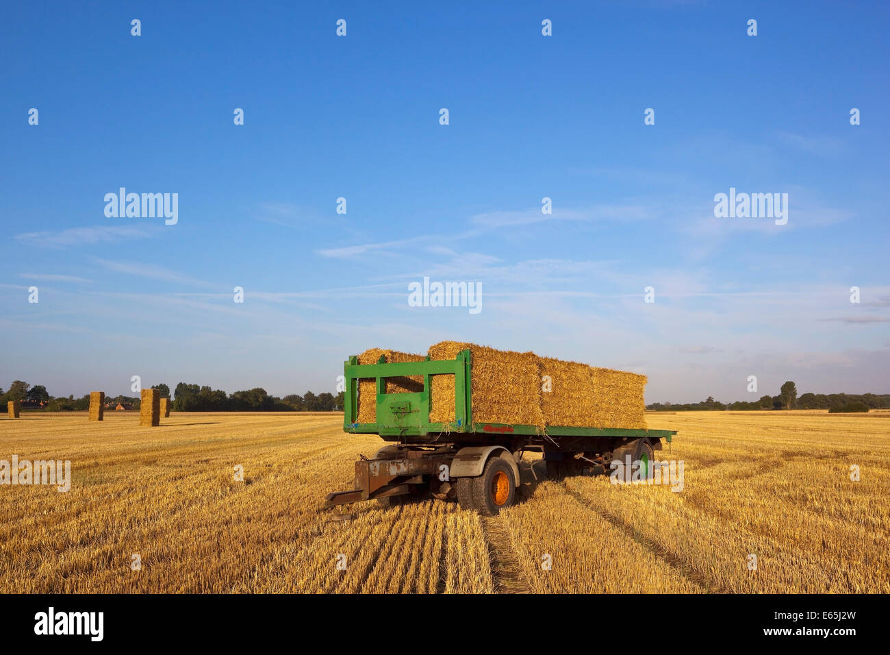 Stubble Field Under Blue Sky Stock Photos Stubble Field