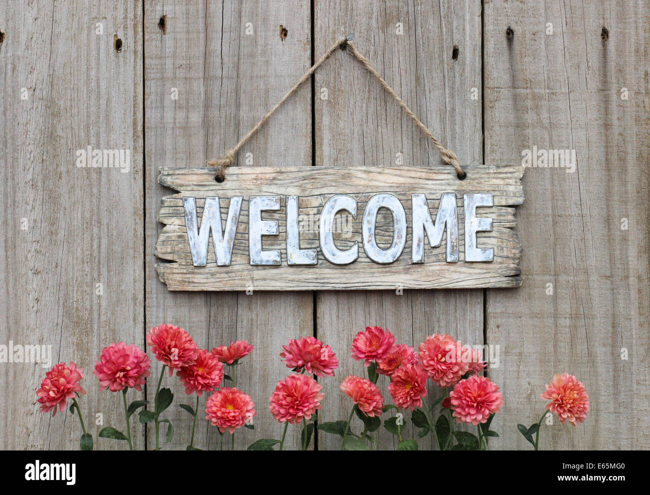 Rustic Welcome Sign Hanging On Weathered Wood Fence With Autumn Flower Border Of Mums