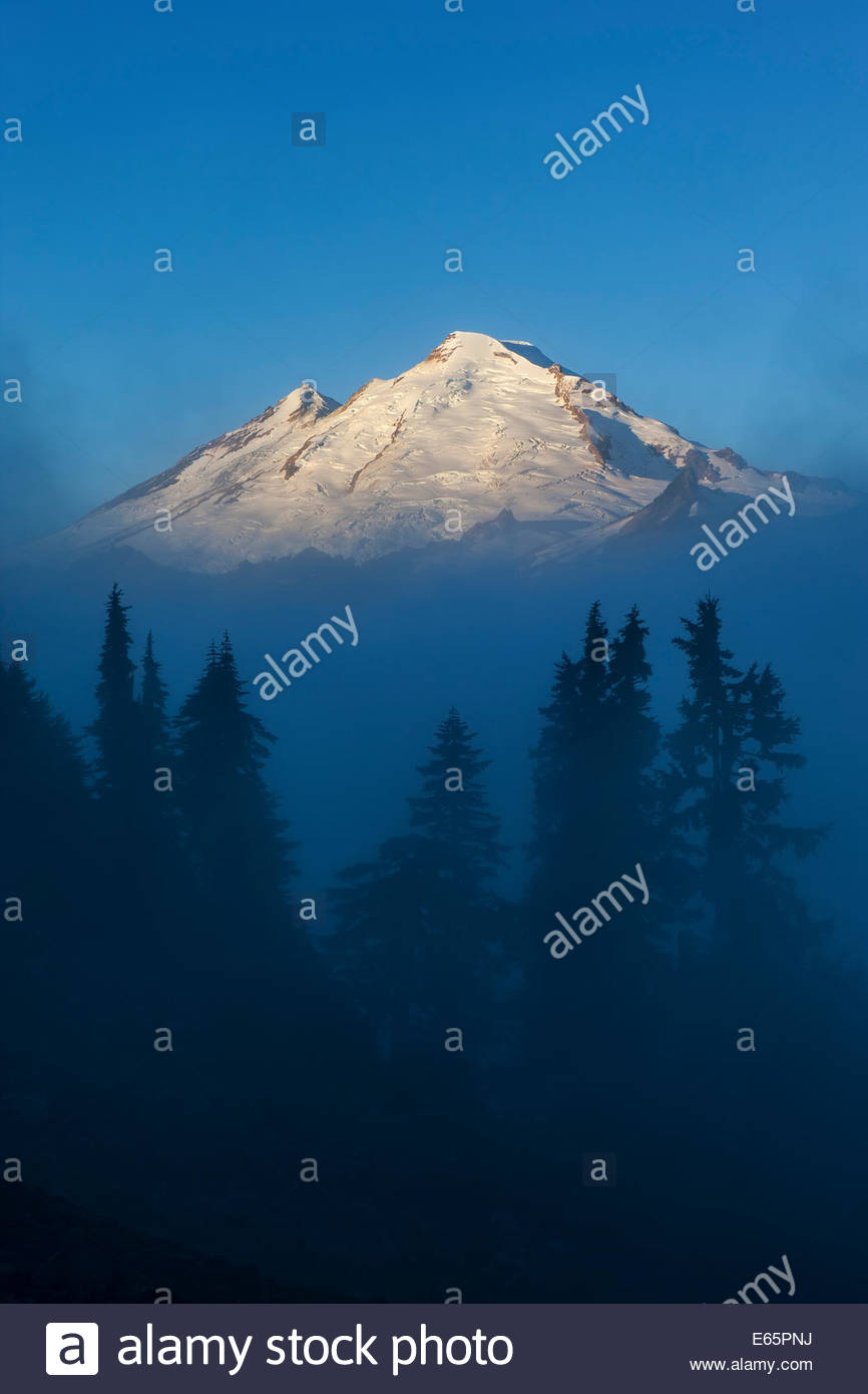 Mount Baker, a 10,781 foot (3,286 m) volcano located in Washington state, towers above the trees and morning fog. - Stock Image