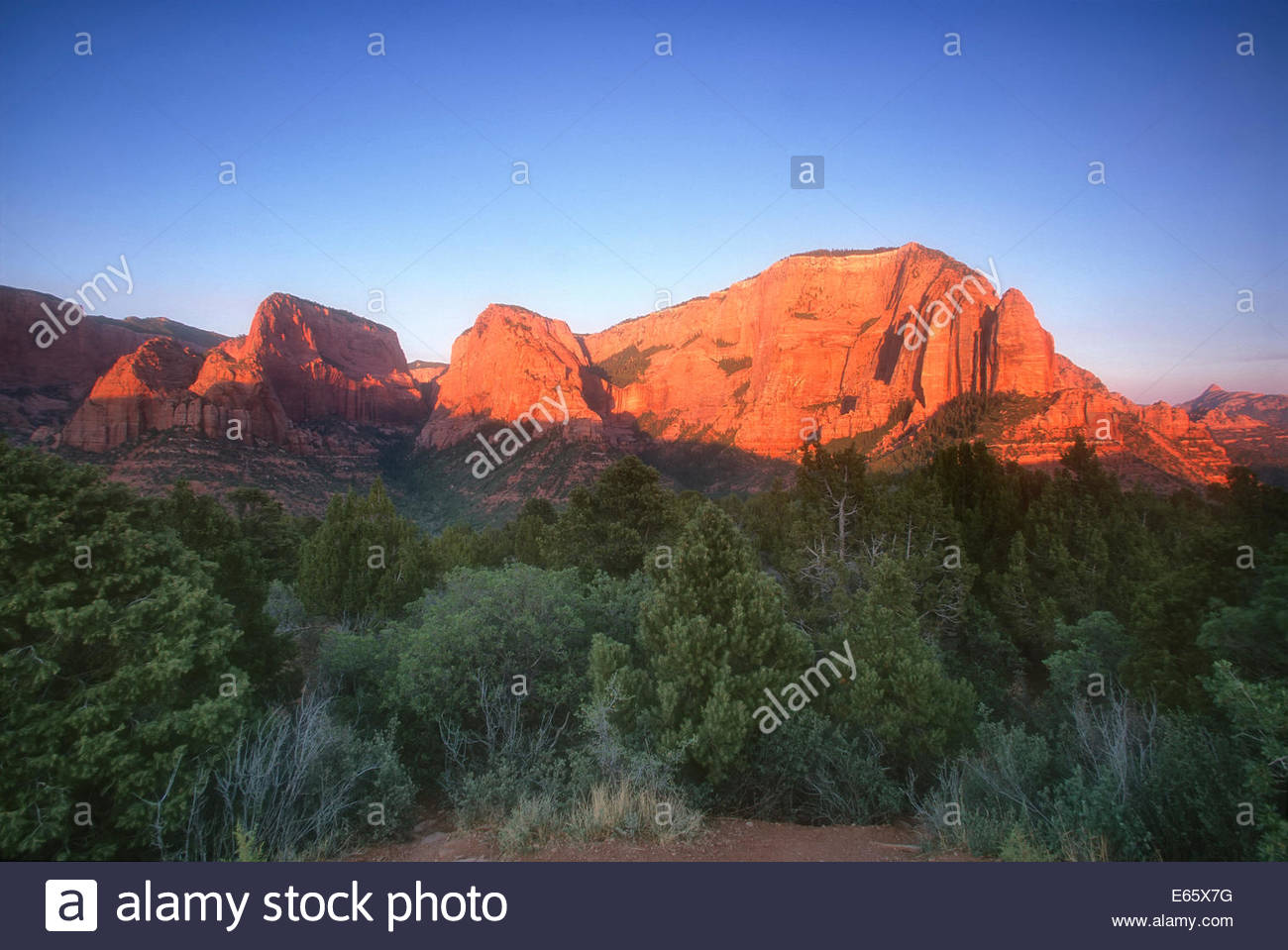 The Kolob Canyons, also called the Kolob Fingers, are turned red at sunset in Zion National Park in Utah. - Stock Image