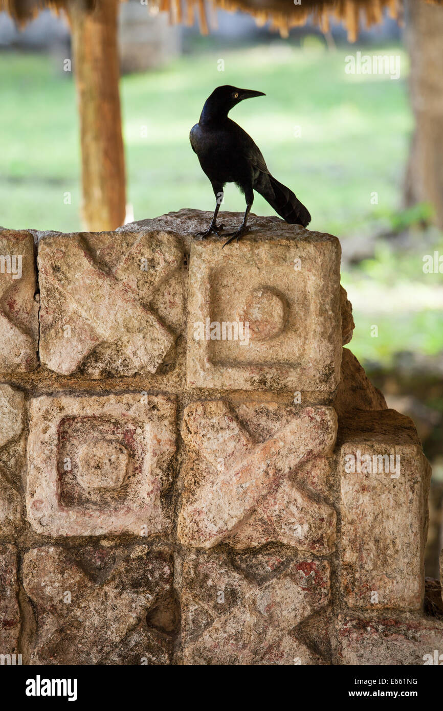 how to stop crows stealing stones