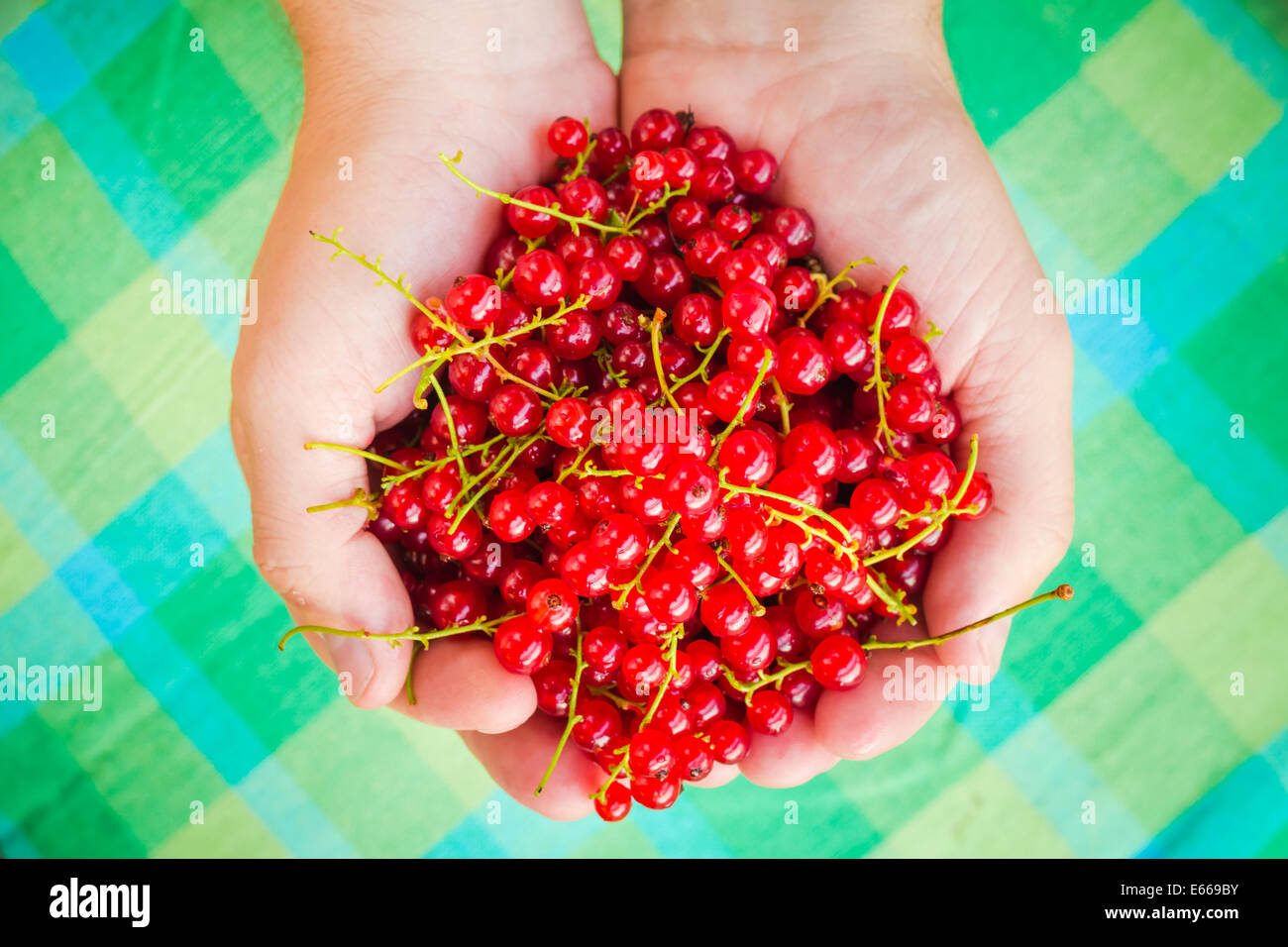 Male hands holding a red currant fruit fresh air - Stock Image