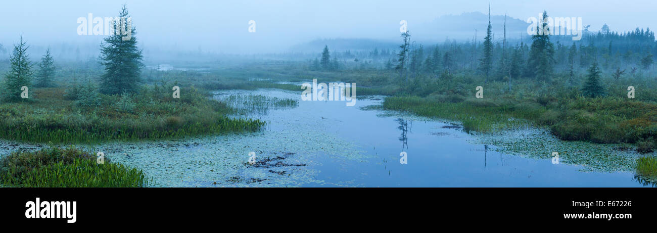 A foggy dawn at Brown's Tract Inlet off Raquette Lake in the Adirondack Mountains of New York - Stock Image
