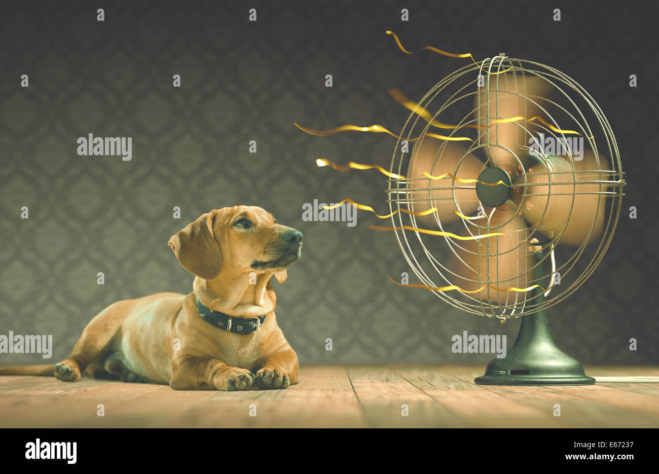 The dog is cooling down with the fan while watching the yellow ribbons in motion. Depth of field in eyes line and - Stock Image