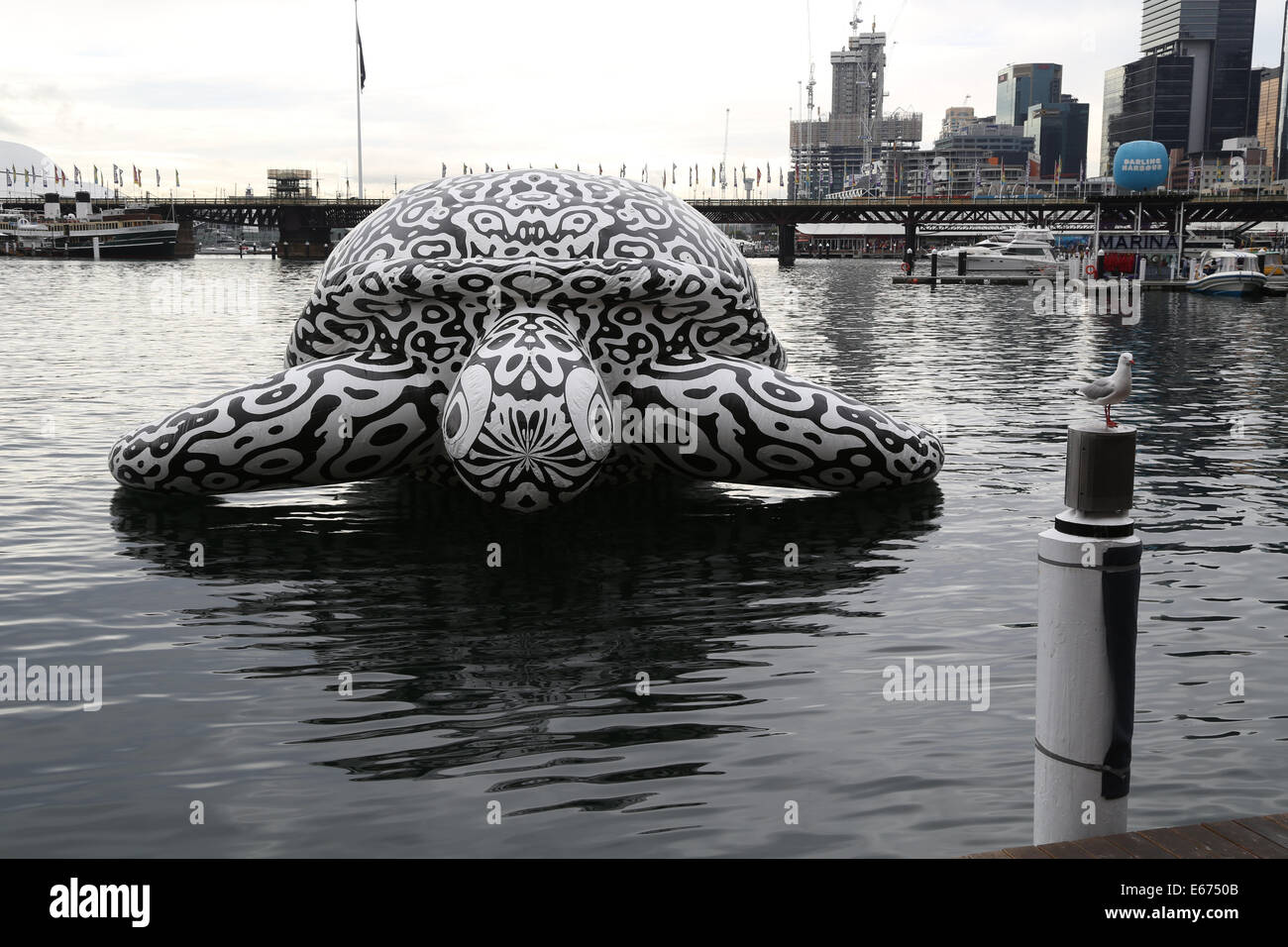 Cockle Bay, Darling Harbour, Sydney, NSW, Australia. 16 August 2014. An inflatable sea turtle sculpture, called - Stock Image