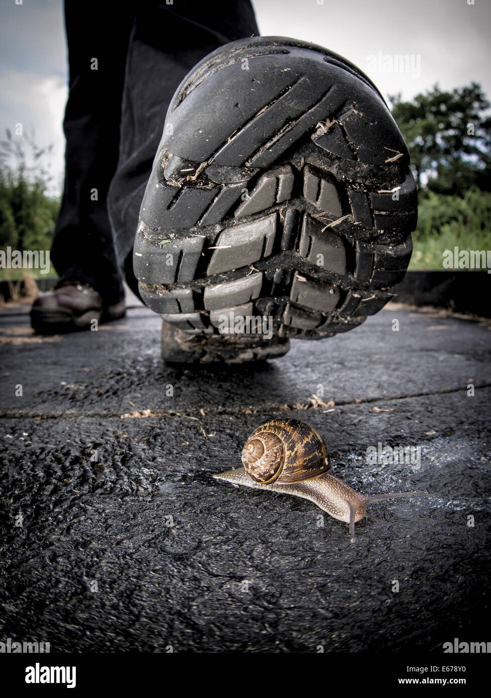 Person about to step on a snail - Stock Image