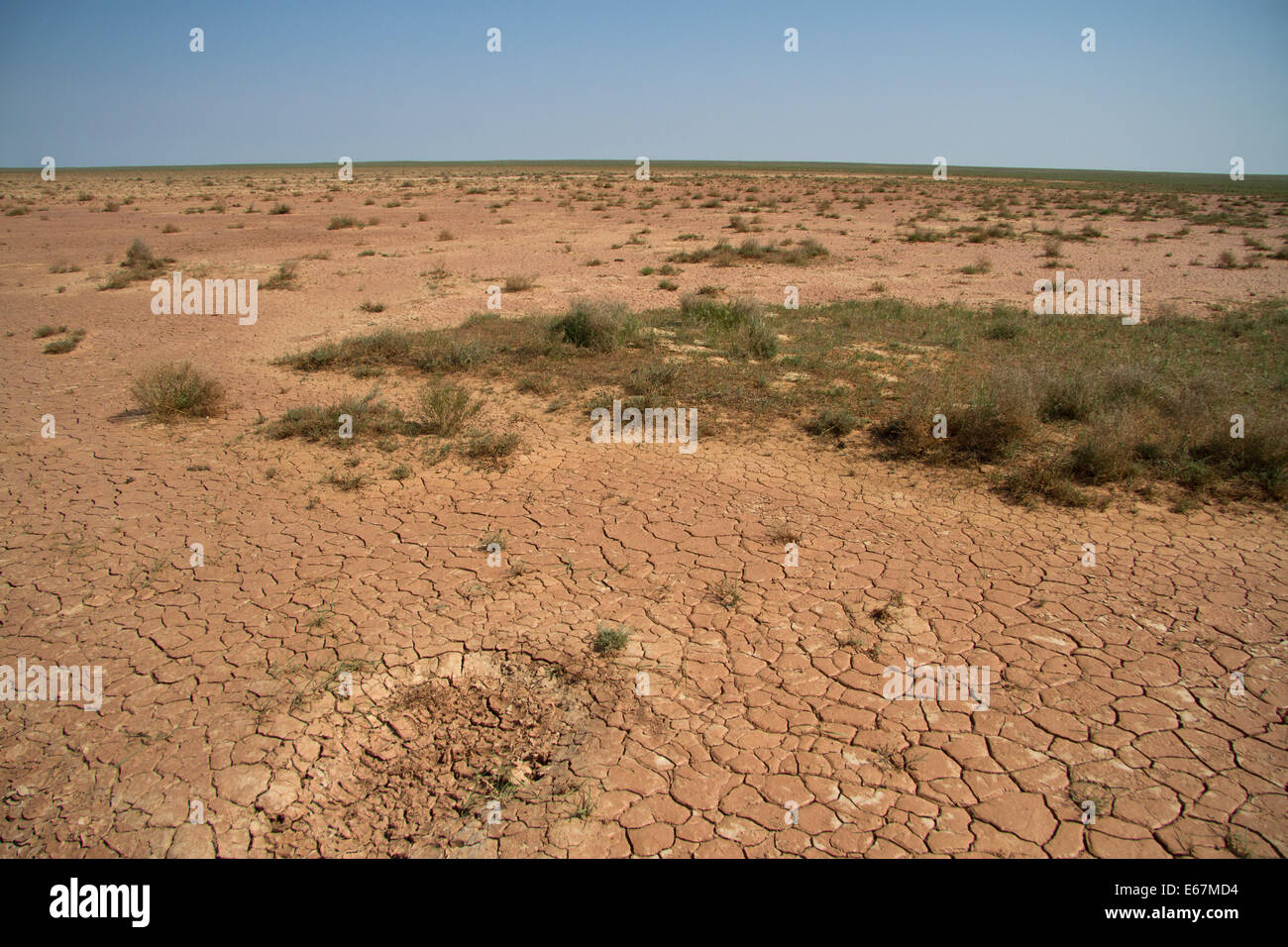 takyr desert with sparse vegetation spring day in Kalmykia - Stock Image