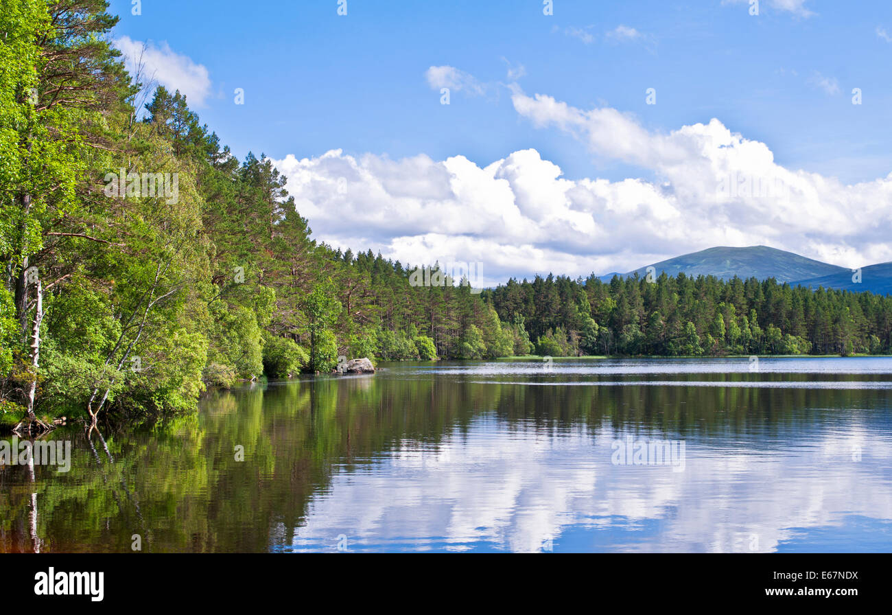 Mixed woodland reflected in Loch Garten, RSPB Abernethy Forest National Nature Reserve, Cairngorms National Park, - Stock Image