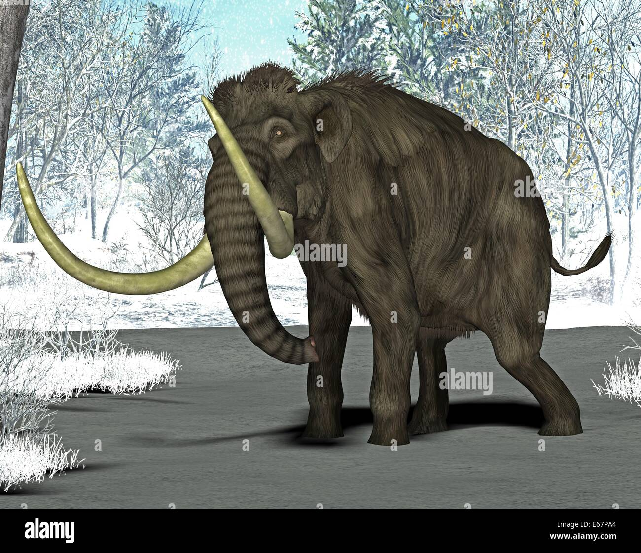Mammut / Mammoth - Stock Image