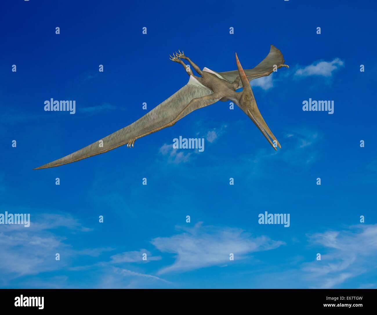 Dinosaurier Pteranodon / dinosaur Pteranodon Stock Photo