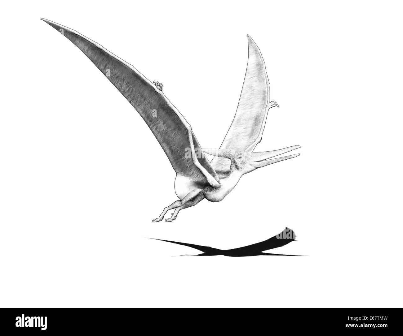 Dinosaurier Pteranodon / dinosaur Pteranodon - Stock Image