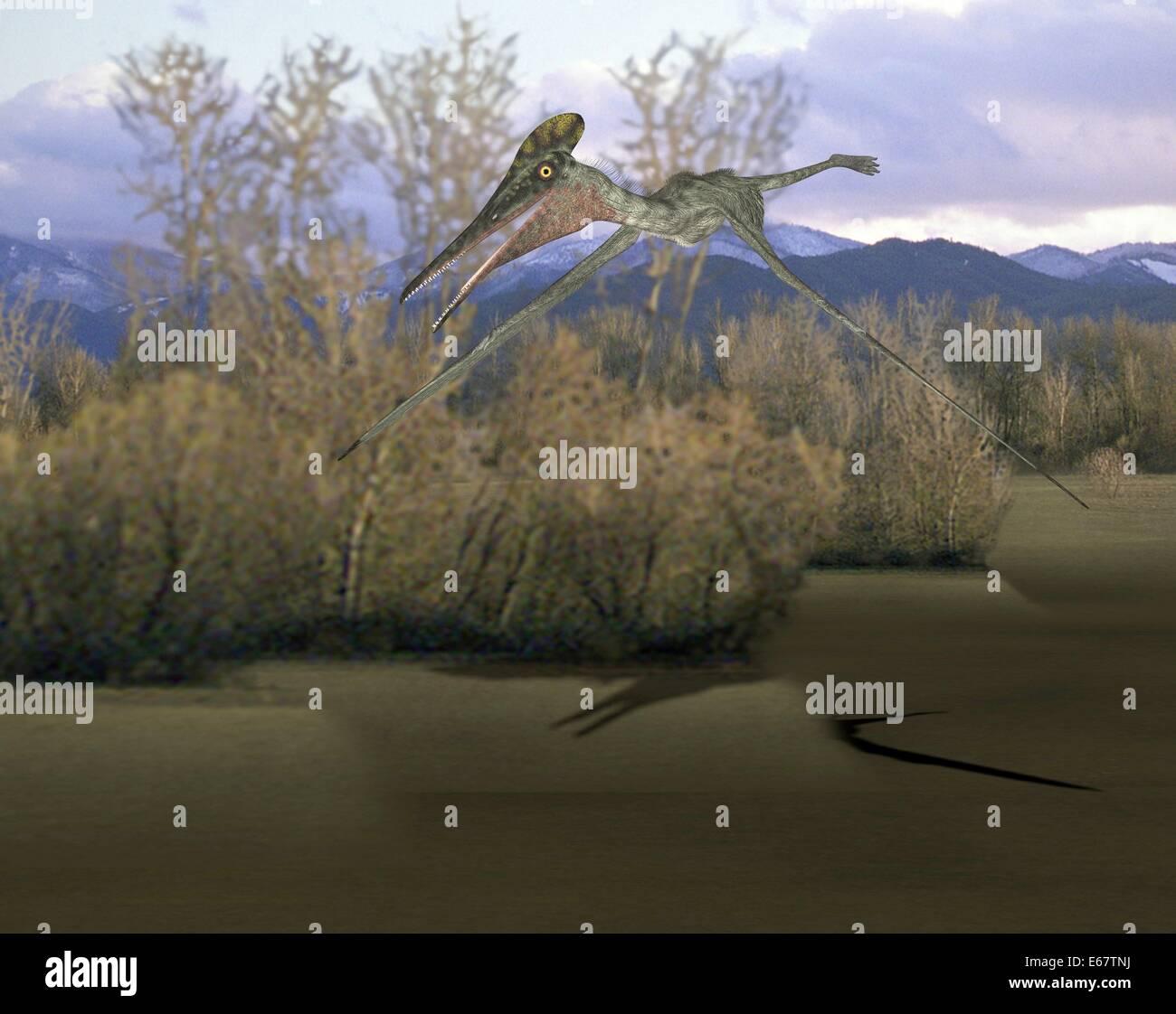 Dinosaurier Pterodactylus / dinosaur Pterodactylus Stock Photo