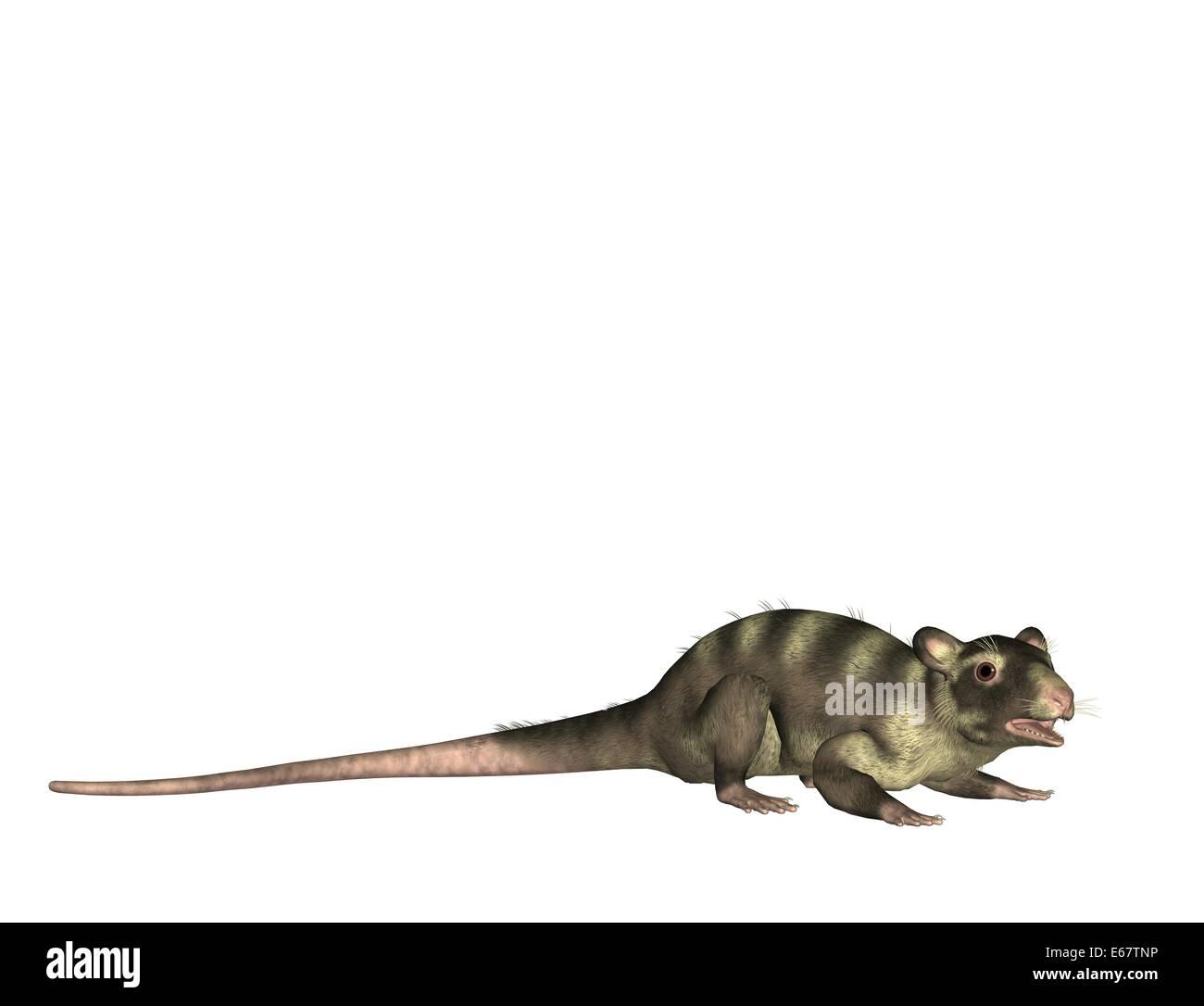 Pterodactylus / Pterodactylus Stock Photo