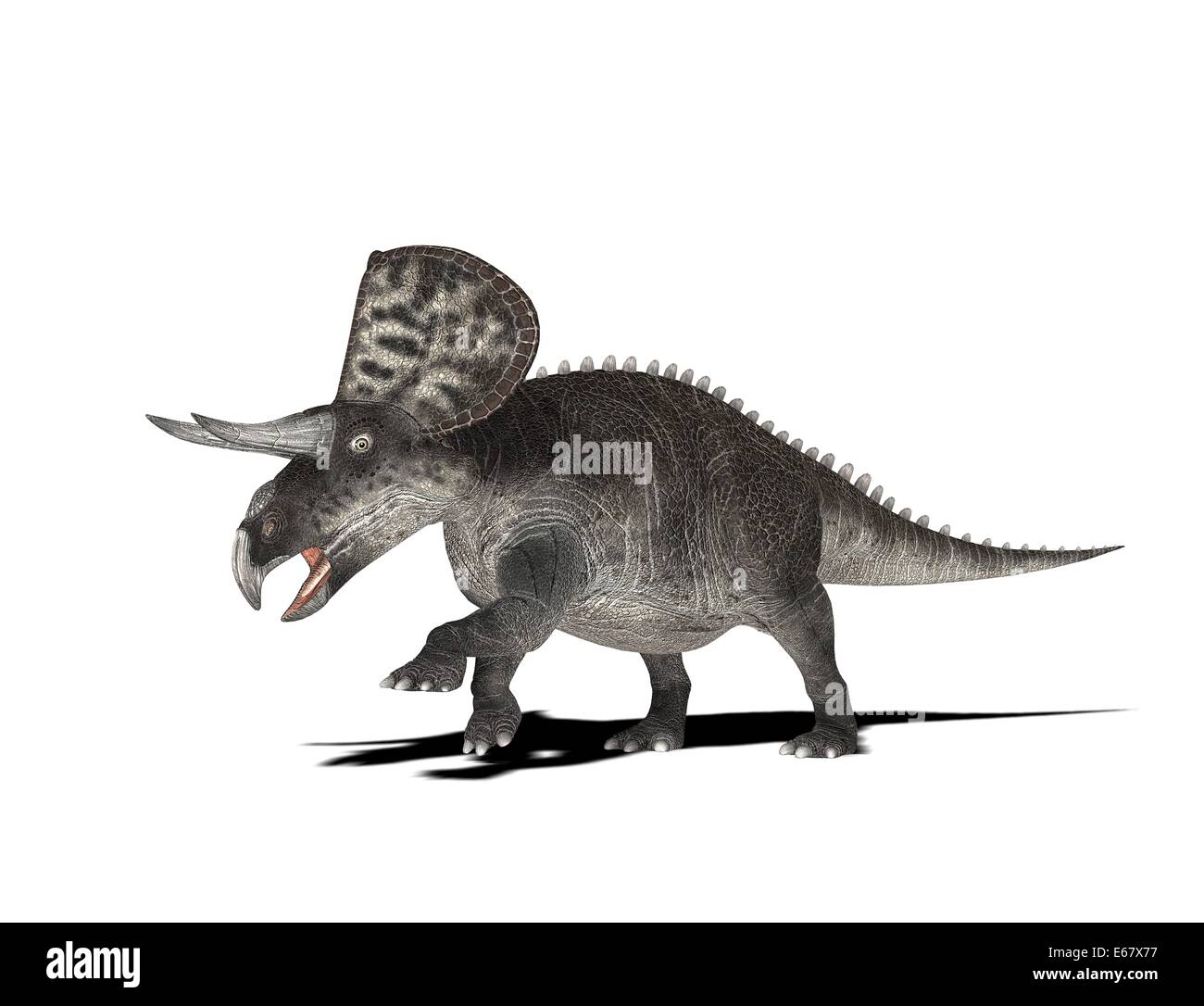 dinosaur ZuniceratopsStock Photo