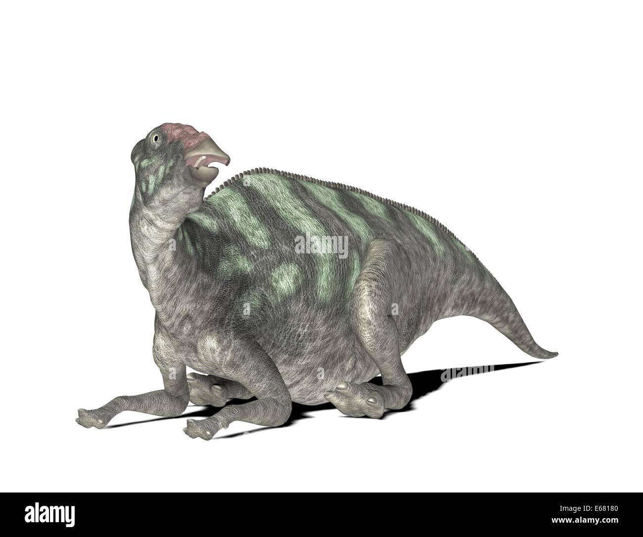 dinosaur MaiasauraStock Photo
