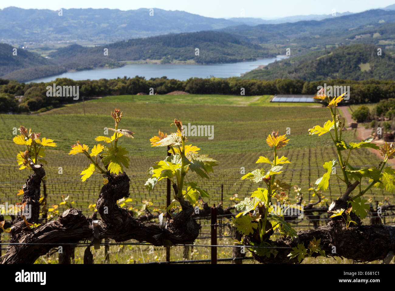 Hennessey Lake viewed from Continuum Estate, Napa Valley, California, USA - Stock Image