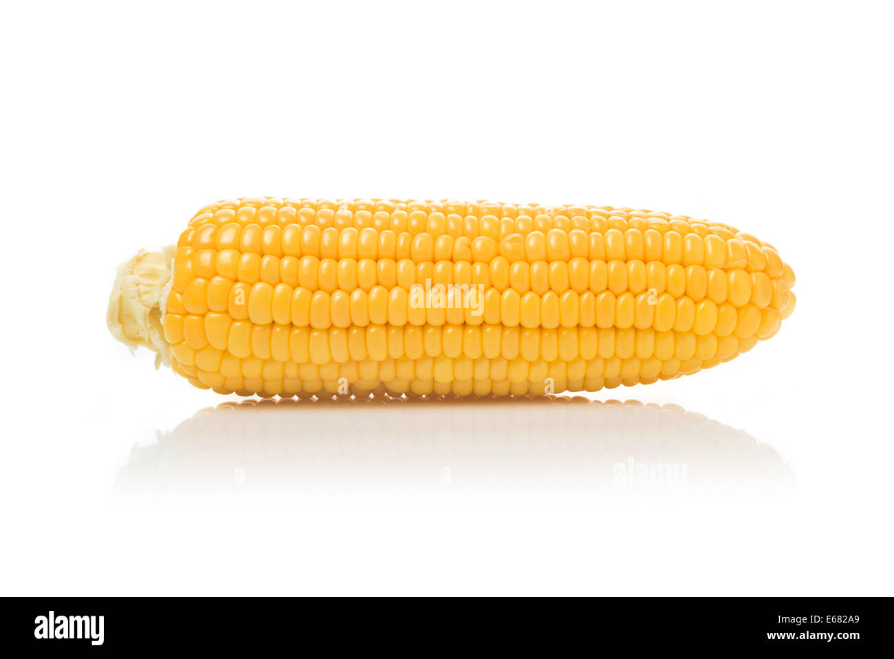 Beautiful fully developed Corn Cob with golden seed over white background. - Stock Image