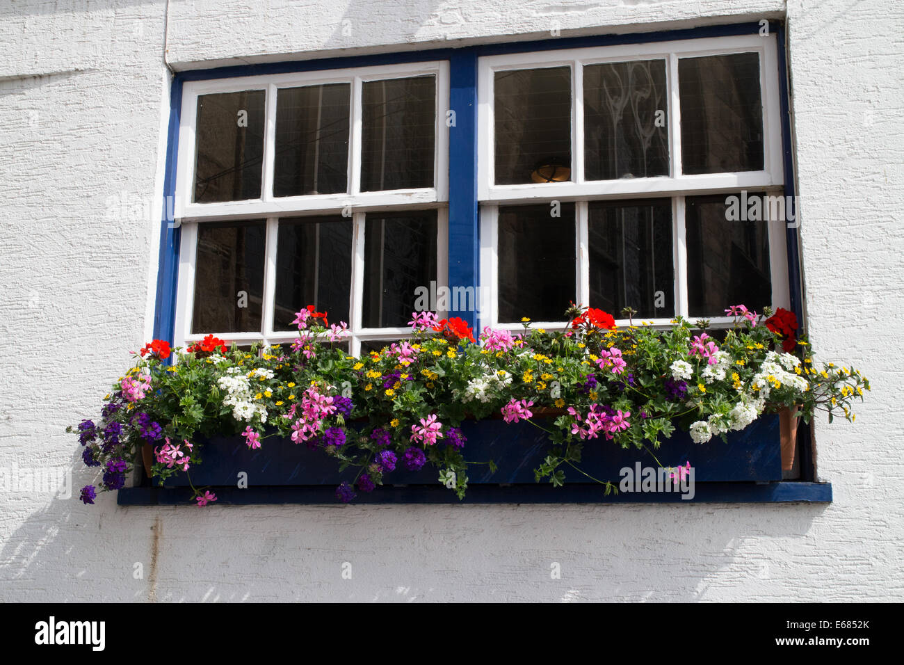 Fresh colourful summer flowers in a pub window box St Peter's Port Guernsey Channel Islands - Stock Image