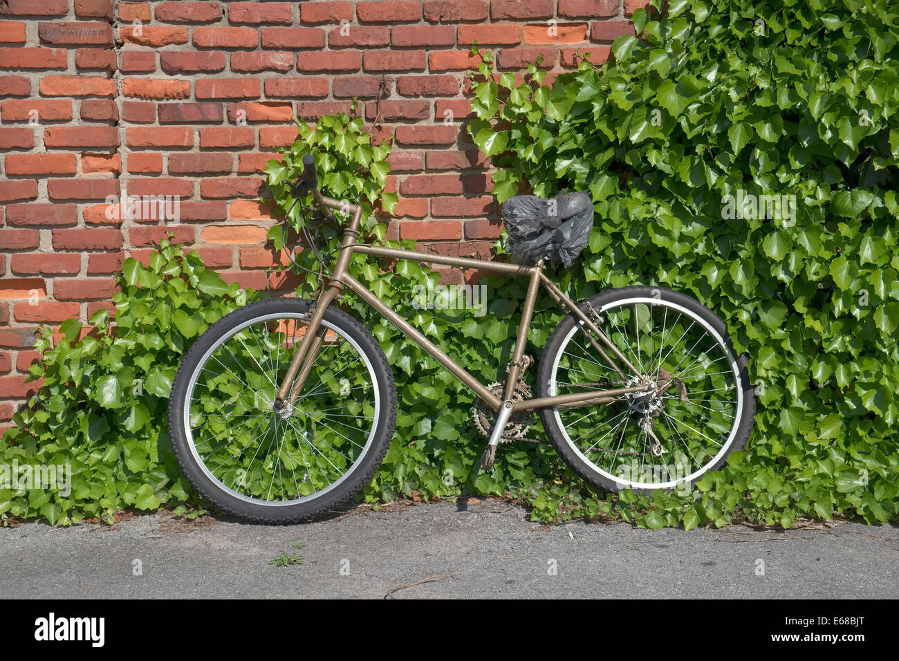 old bike leaning against brick wall with vines growing up it. - Stock Image