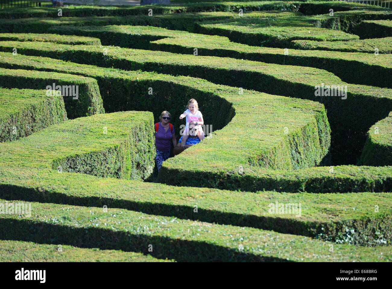 Longleat Safari Park hedge maze, Wiltshire, England - Stock Image