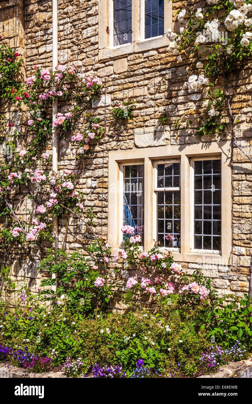 Cotswold stone cottage front with mullioned, leaded windows, rambling roses and a pretty front garden. - Stock Image