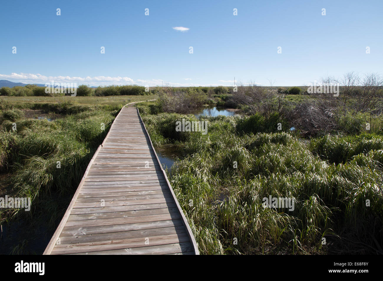 Wooden Footpath through Riparian Area - Stock Image