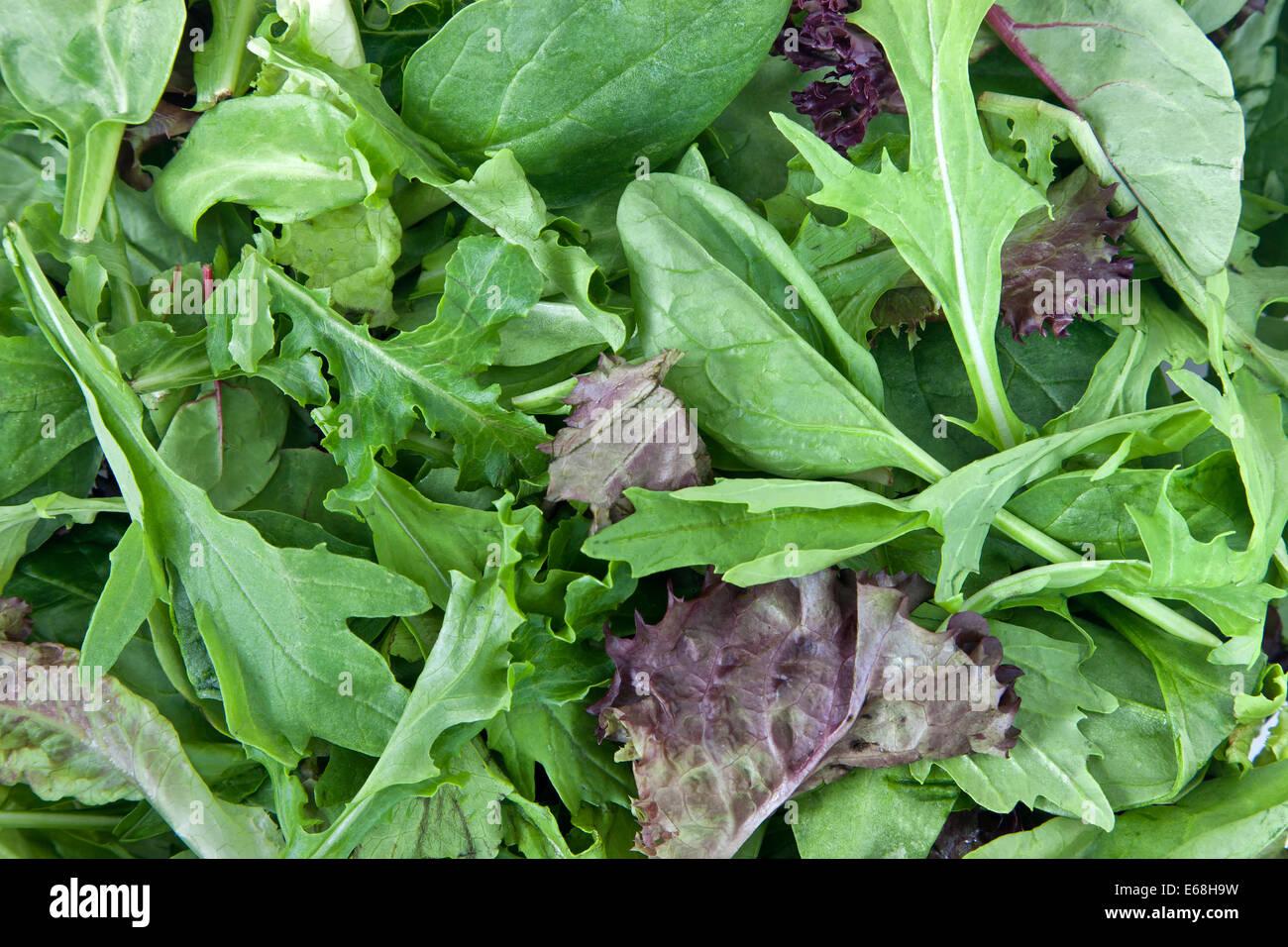 Organic 'baby lettuce' 'spring' salad mix. - Stock Image