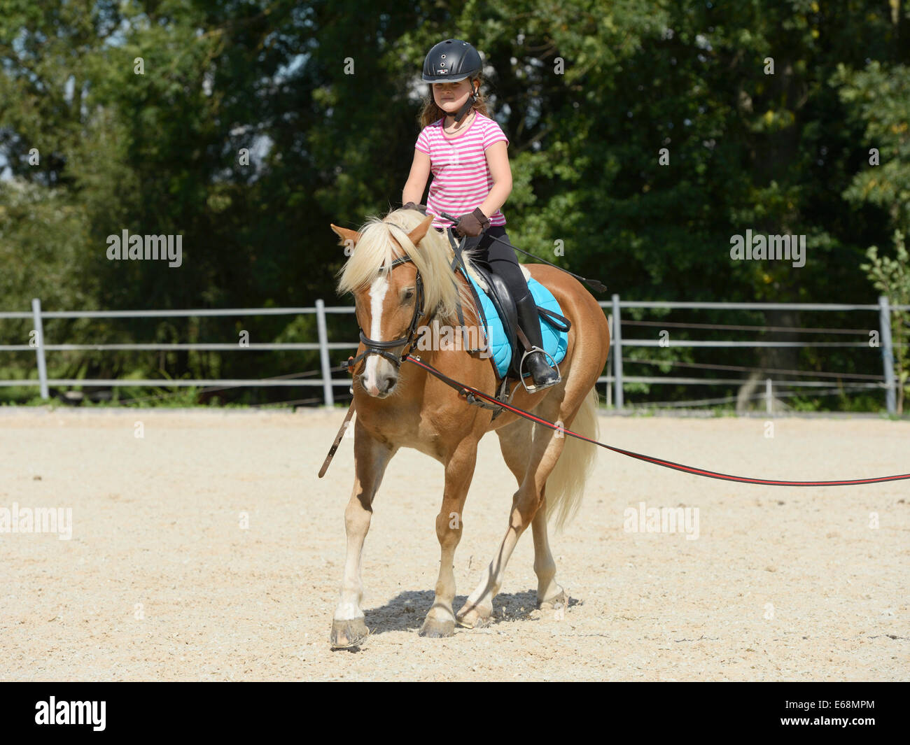 Young girl riding on back of lunged Haflinger horse - Stock Image