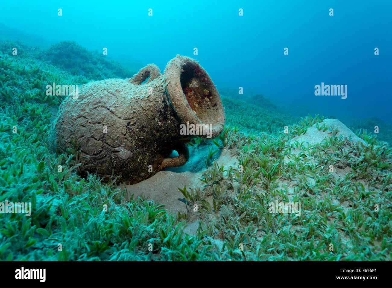 Amphora on seagrass meadow, Red Sea, Makadi Bay, Hurghada, Egypt - Stock Image