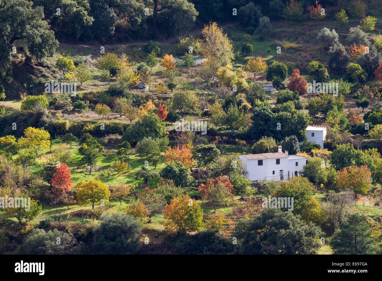 Farmhouse in a garden with different fruit trees in autumn, Genal river valley, Málaga province, Andalusia, - Stock Image