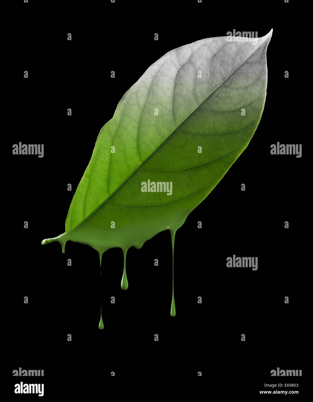 color dropping off from green leaf, environmental damage concept - Stock Image