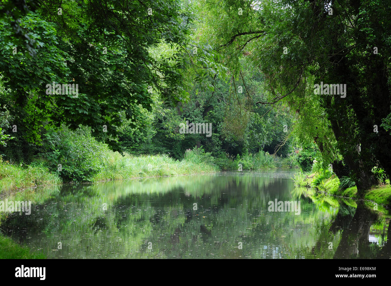 Basingstoke canal near Crookham - Stock Image