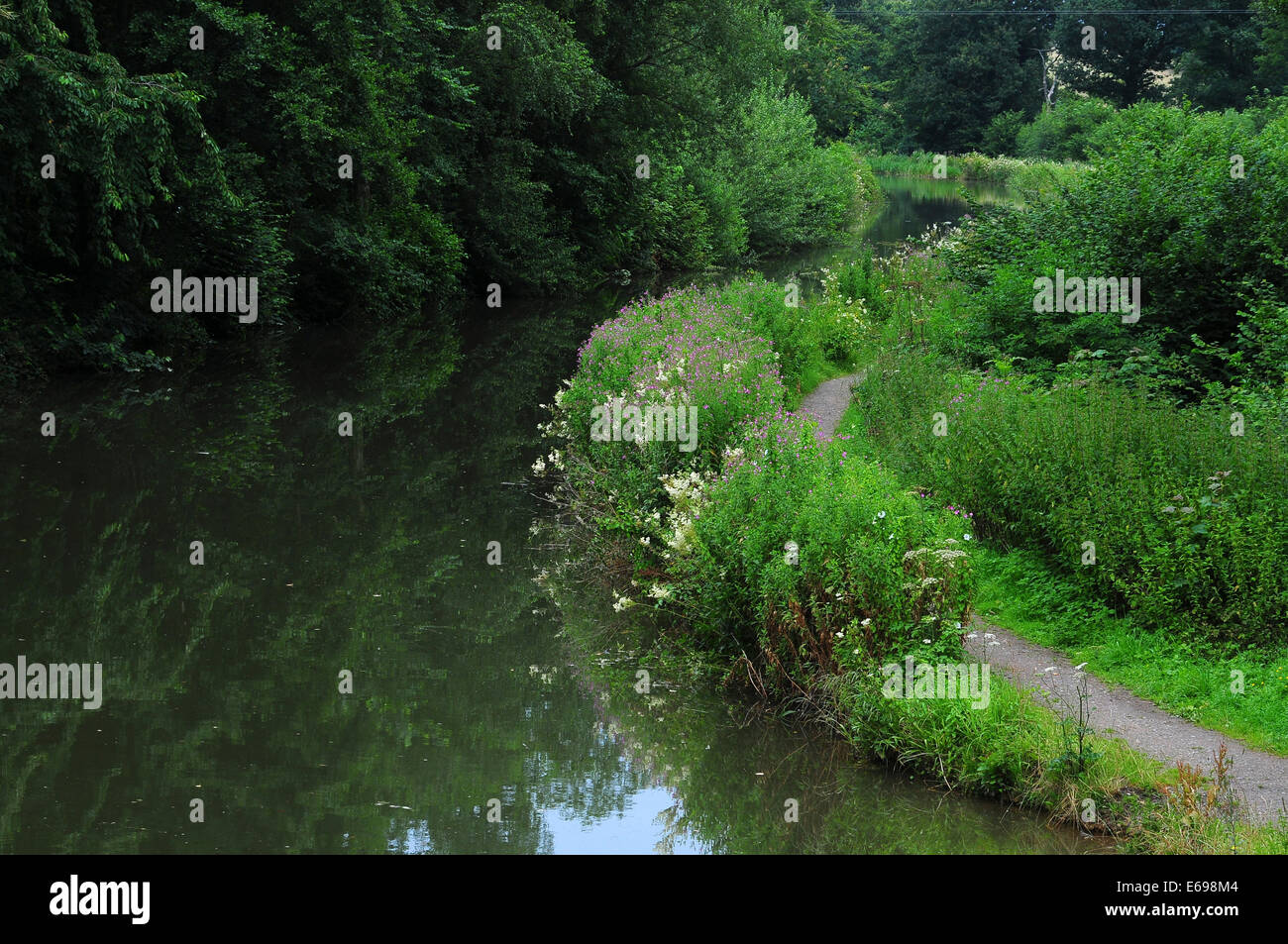 Basingstoke canal near Dogmersfield UK - Stock Image